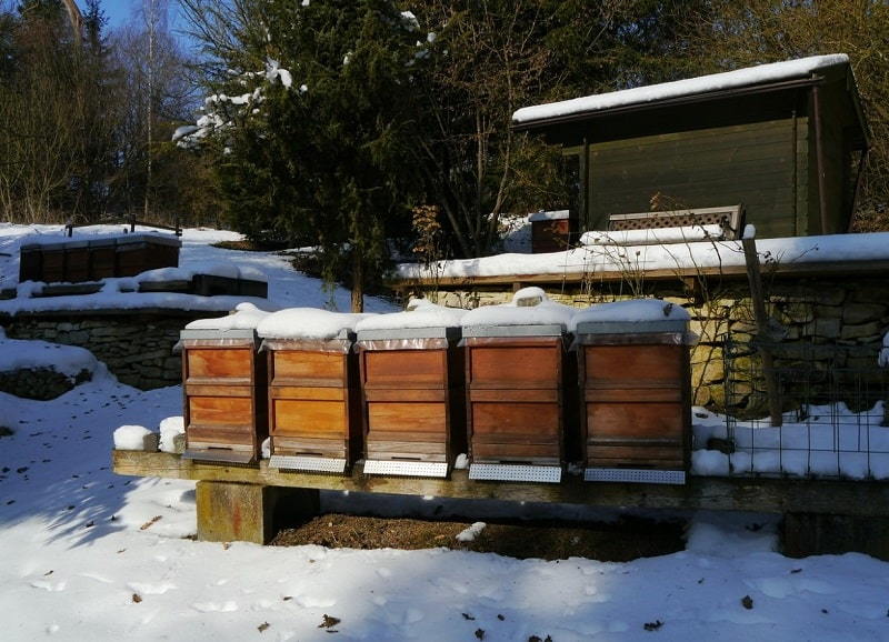 Wrap bee hives in the winter