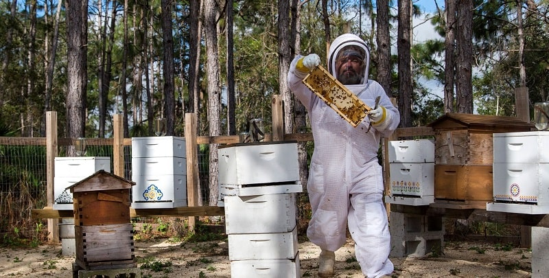 Beekeeping Protective Clothing for Beginners