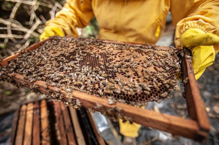 How Do You Use A Honey Extractor
