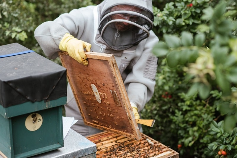 How To Clean Beekeeping Gloves