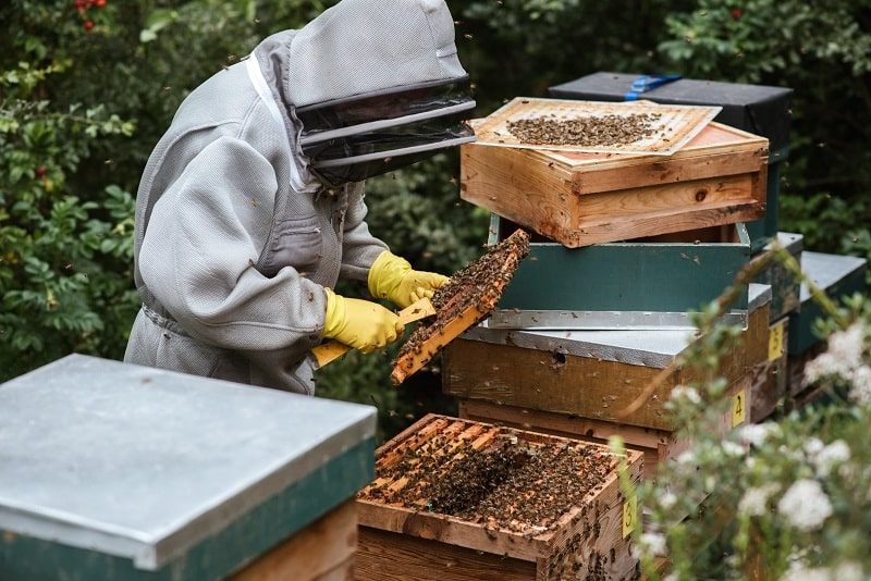 How-to-clean-beekeeping-gloves