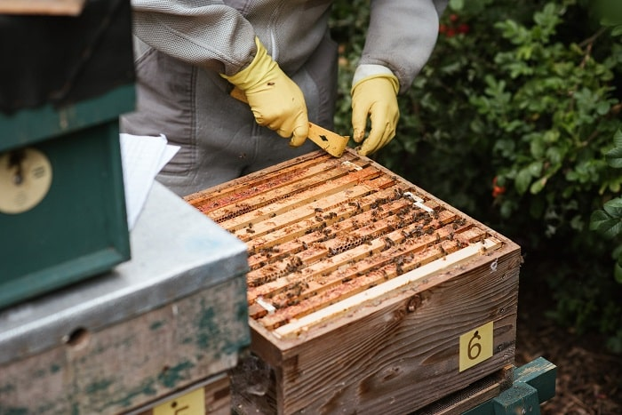 How To You Use A Honey Extractor