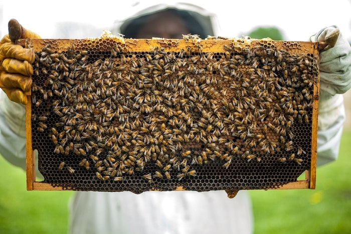 How to Processing Beeswax