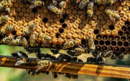 Where does beeswax come from?