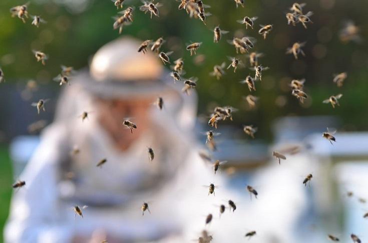 Best-Beekeeping-Apps