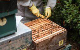 best-honey-extractors-reviews