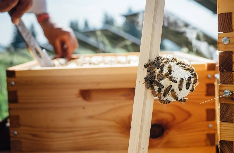When should you wrap bee hives in the winter