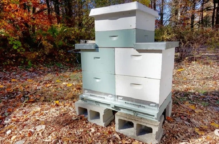 How to Build a Langstroth Beehive