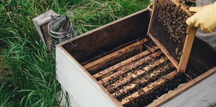 How to Treat Varroa Mite and Save Your Bees