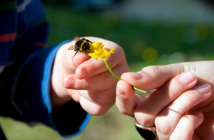 What Causes Bees to Die After Stinging You