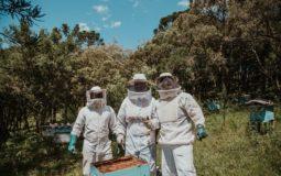 beekeeping-jacket