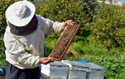 how to get rid of hive beetles in a beehive 2