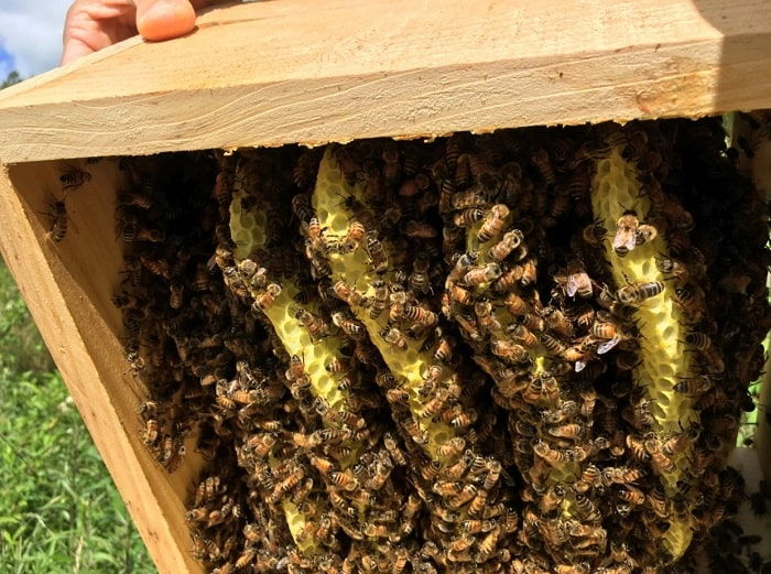 how to get rid of hive beetles in a beehive