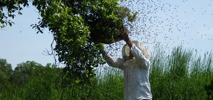 how to get rid of the bees without killing them