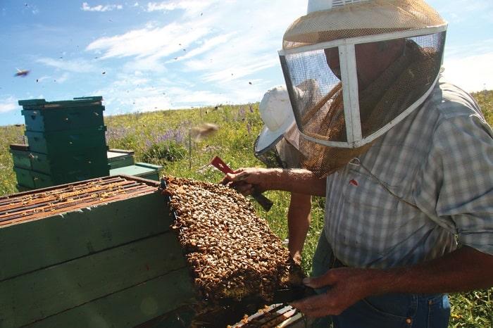 how to make a homemade bee smoker