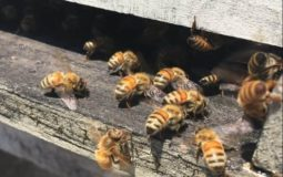 how to use an entrance reducer on a beehive