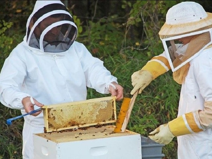 Can you eat honey from a beehive