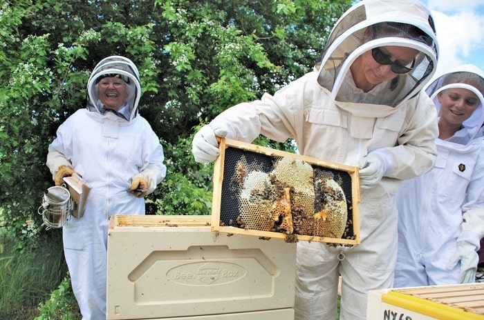 Common Problems with Beekeeping That Every Beekeeper Will Face