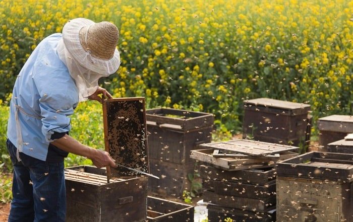 How Close Can You Put Beehives Together