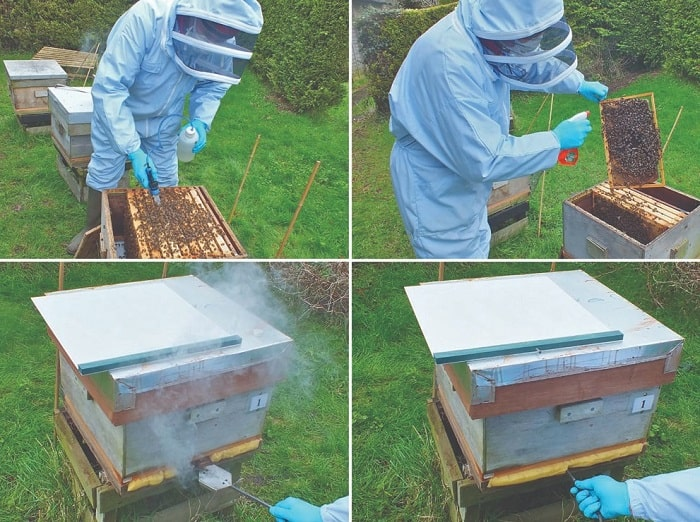 How Much Oxalic Acid Per Hive