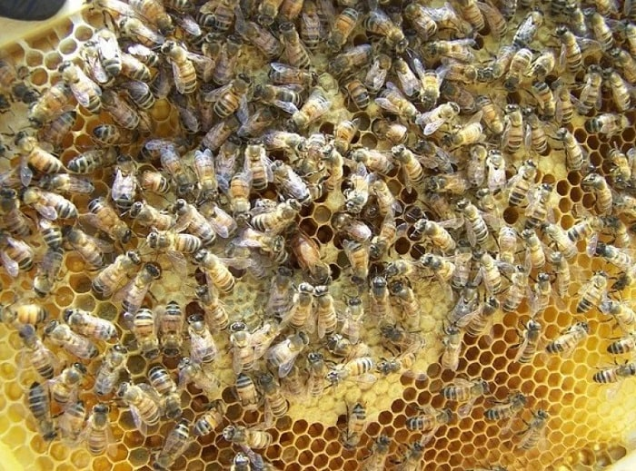 How To Find The Queen Bee