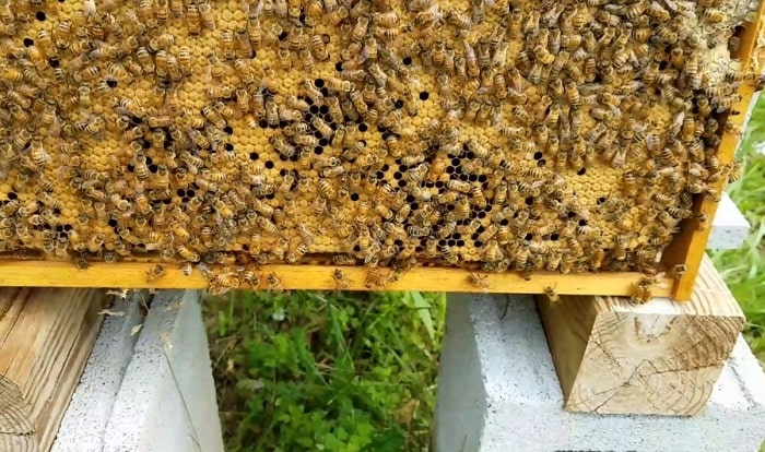 How To Stop Bees From Swarming