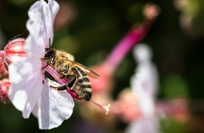 What Does Bees Like To Eat 2