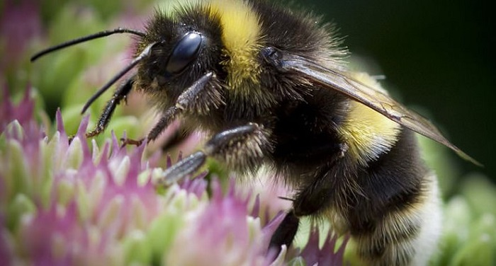 how long do queen bees typically live