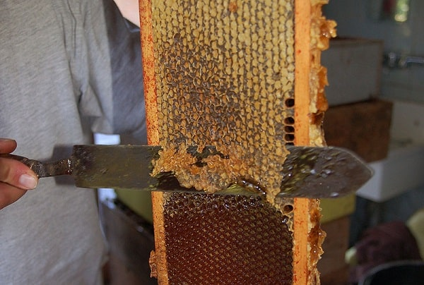 how to harvest honey at home