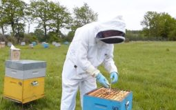 what happens if you leave honey supers on during apivar treatment