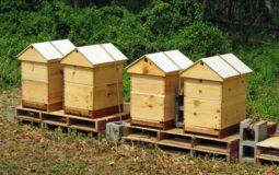10 Frame Langstroth Beehive Plans