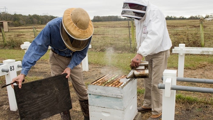 How To Raise Bees For Honey