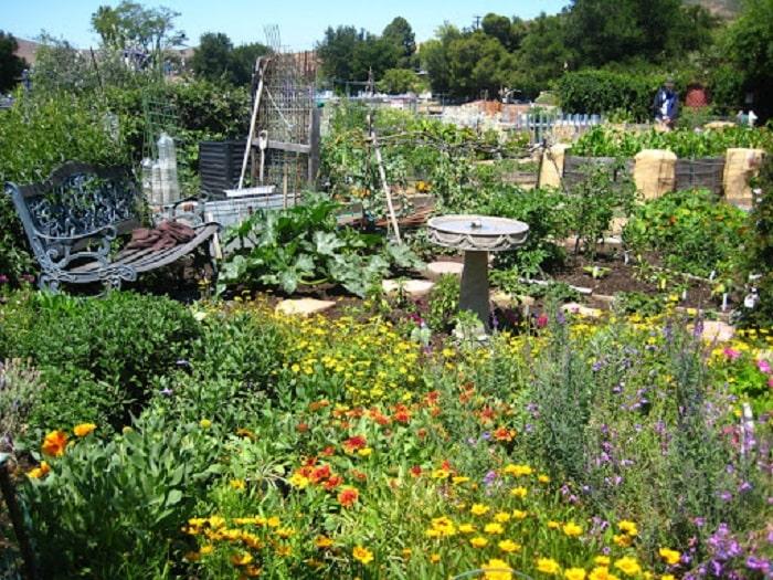 Plant-a-bee-garden