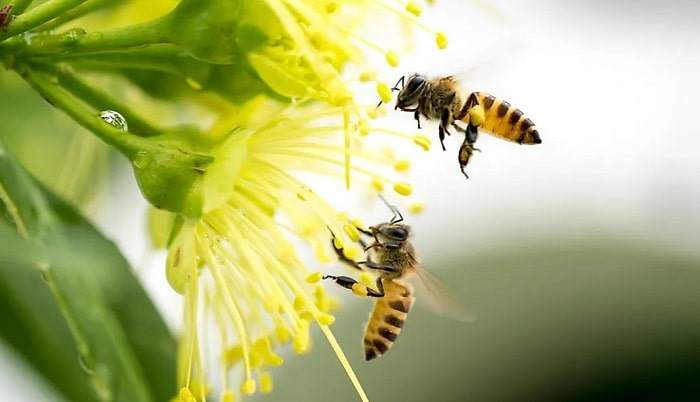 Plant trees for bees