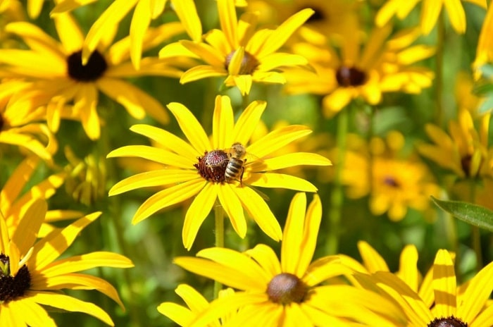 The Best Flowers For Bees