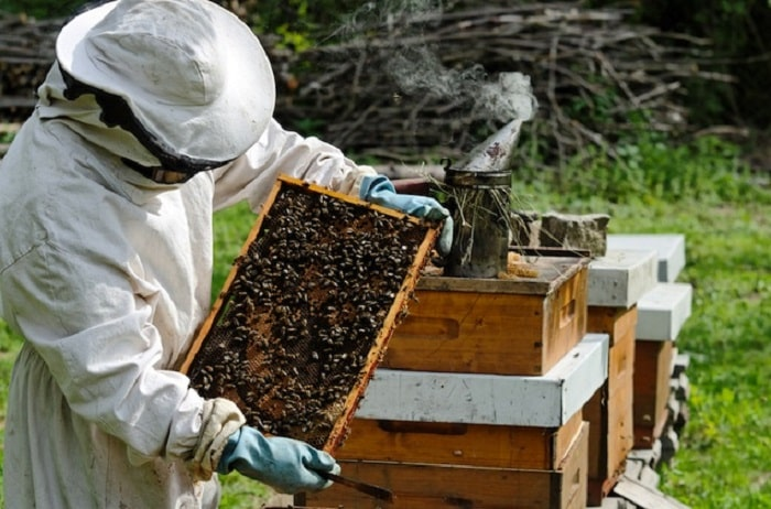 What Is A Bee Farming Called