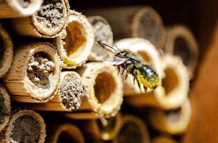 Where Can You Buy Mason Bees