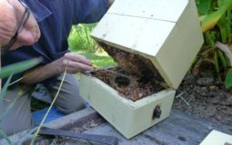 How to split a beehive