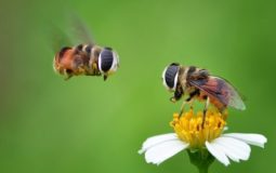 How Bees Work