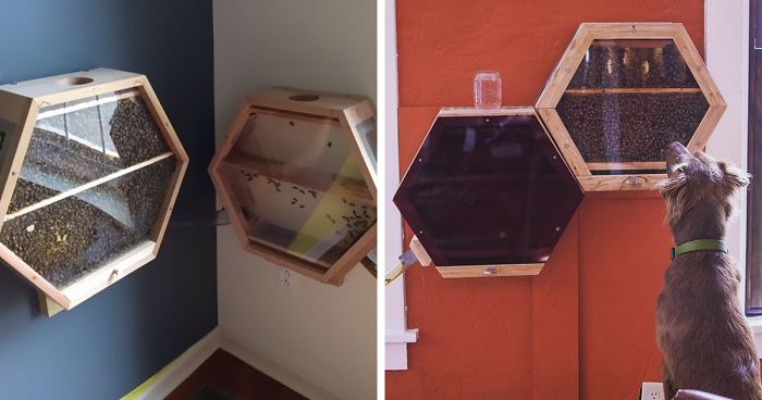 Indoor Beekeeping 2