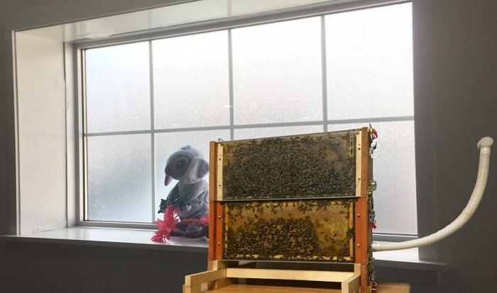 Indoor Beekeeping