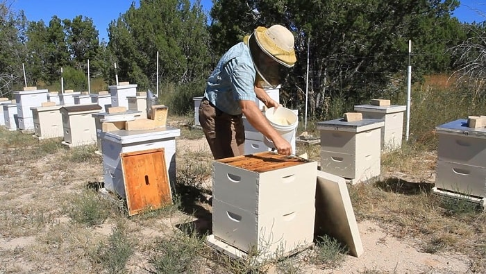 Terramycin Powder for the Control of Foulbrood in Honey Bees