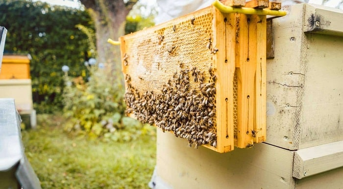 Clean And Reuse A Dead Beehive