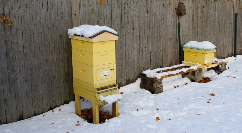Can You Keep Bees Inside for Winter