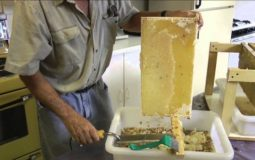 How To Extract Honey By Pressing Machine
