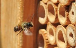 How to Attract Mason Bees